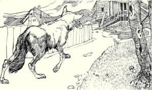 Волк и человек