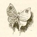 Сказки Ханса Кристиана Андерсена. Мотылёк