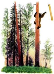 Рассказ Константина Дмитриевича Ушинского. Медведь и бревно