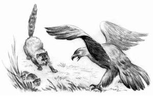 Рассказ Константина Дмитриевича Ушинского. Орел и кошка