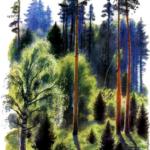 Рассказ Константина Дмитриевича Ушинского. В лесу летом